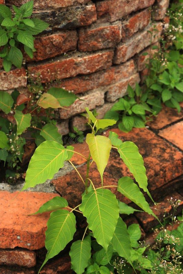 Les feuilles de jeunes dans le vieux jardin image libre de droits