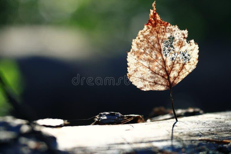 Les feuilles de l'année dernière photographie stock libre de droits