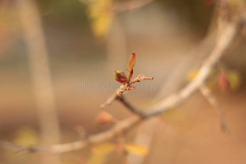 Les feuilles de l'arbre de tamarinier sont fleurissantes dans la fin d'été images stock