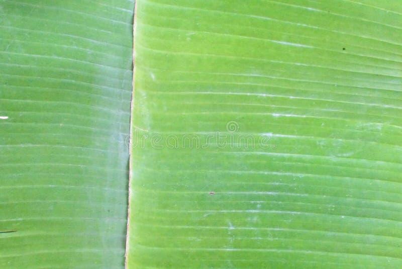 Les feuilles de la banane à l'arrière-plan images libres de droits