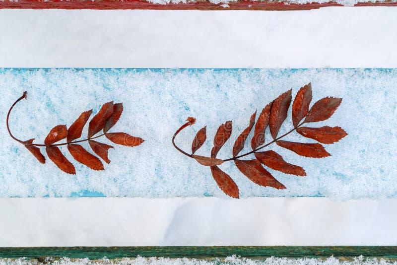 Les feuilles de la cendre de montagne sur des panneaux de neige que la vue de l'hiver ci-dessus est les feuilles froides et tombé image libre de droits