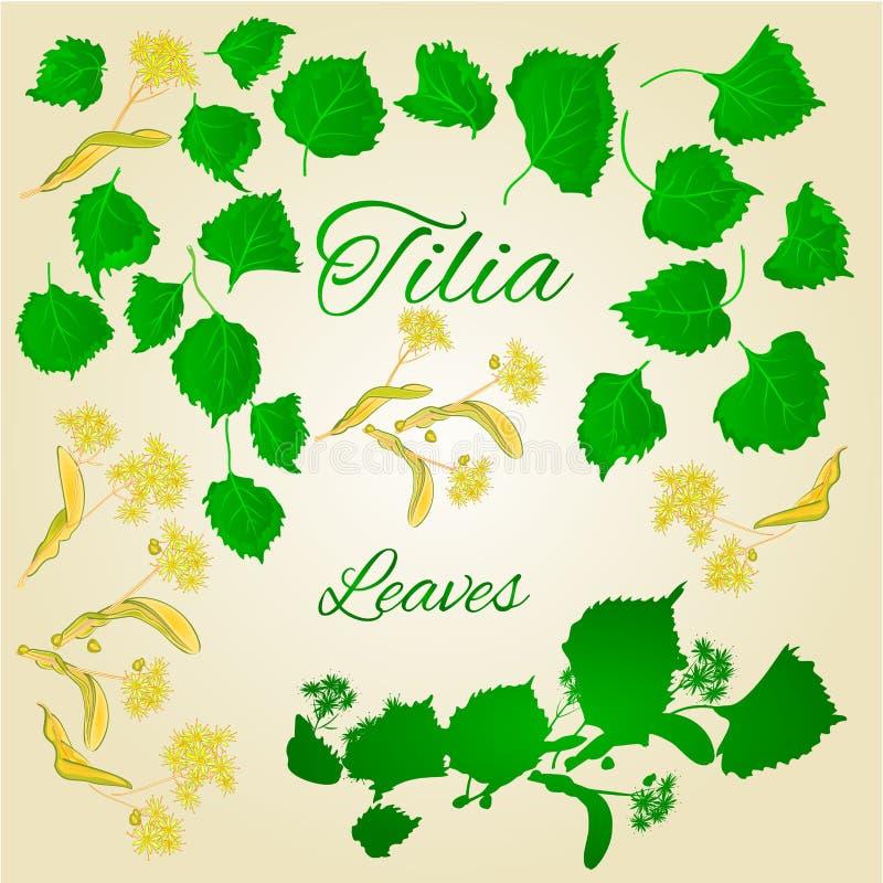 Les feuilles de Tilia-tilleul avec le tilleul fleurit le vecteur illustration de vecteur