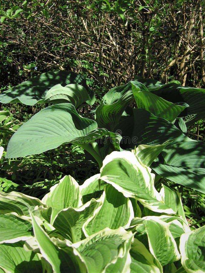 Les feuilles de vert sont des centres serveurs photo stock