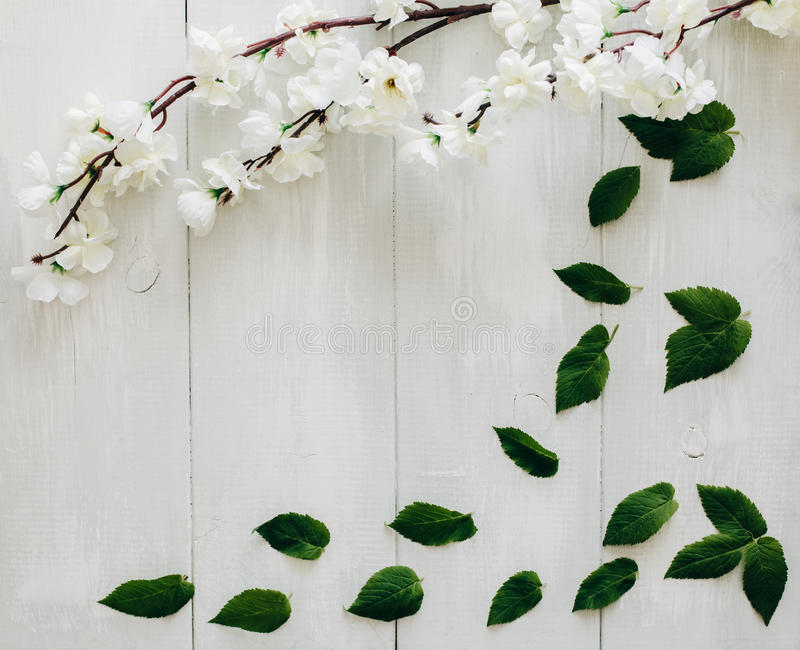 Les feuilles et Sakura de vert s'embranchent sur le bureau en bois blanc sur le fond Configuration plate, vue supérieure photo libre de droits