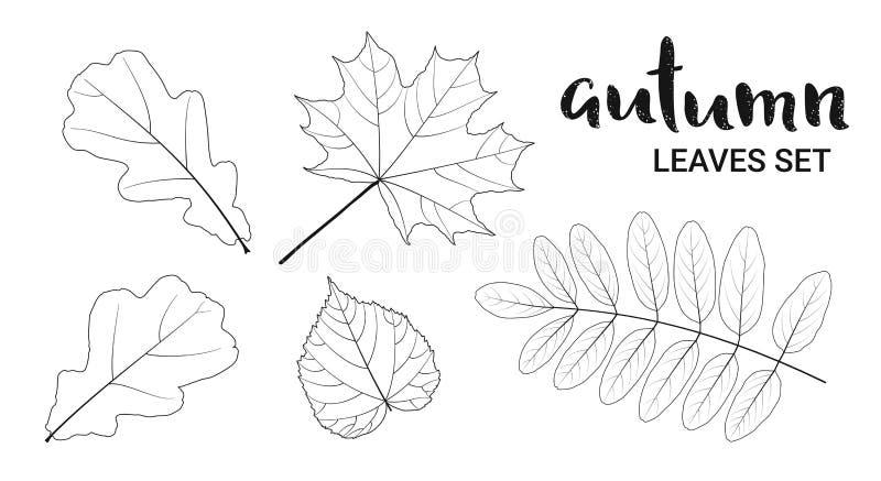 Les feuilles linéaires d'automne ont placé, d'isolement sur le fond blanc illustration libre de droits
