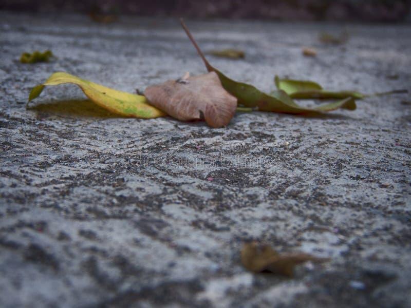Les feuilles mortes photo stock