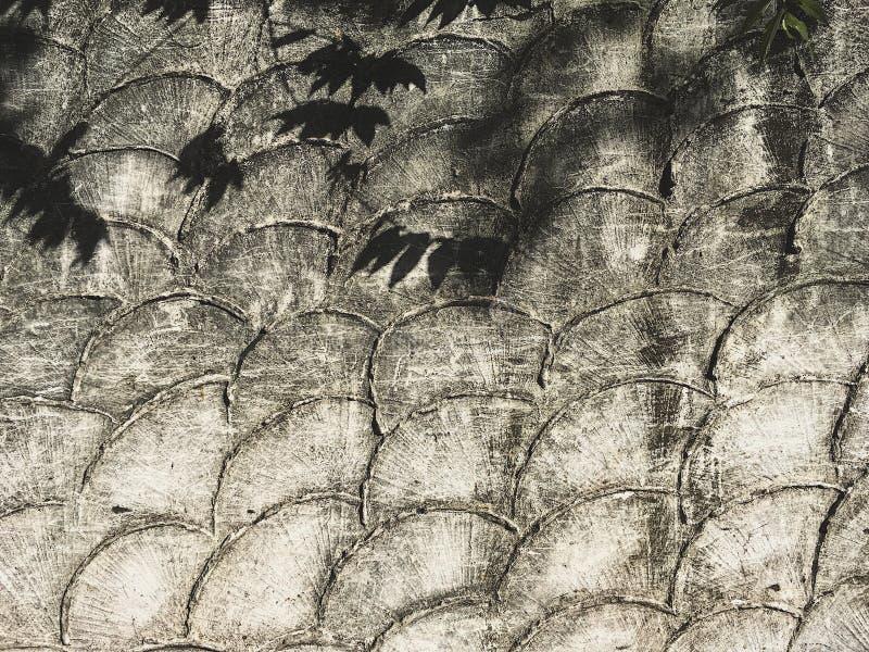 Les feuilles ombragent sur le fond concret de modèle troweled par croissant photographie stock libre de droits