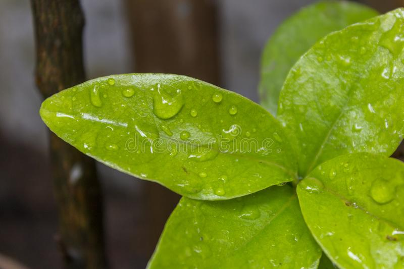 Les feuilles les plus vertes dans le jardin images stock