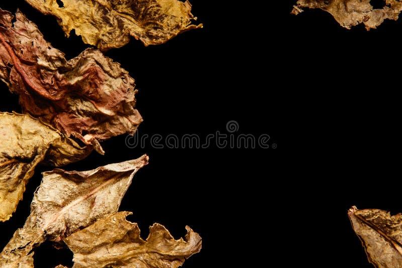 Les feuilles sèches du thé d'oolong de lait est sur un fond et un espace noirs pour le texte photos stock