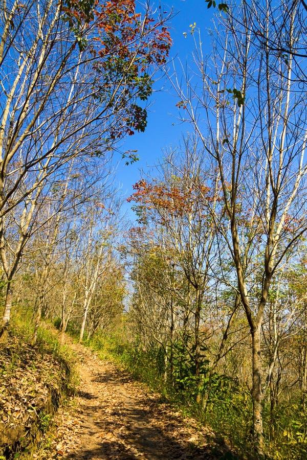 Les feuilles sèches idylliques d'arbres d'automne étonnant changent le jaune images libres de droits