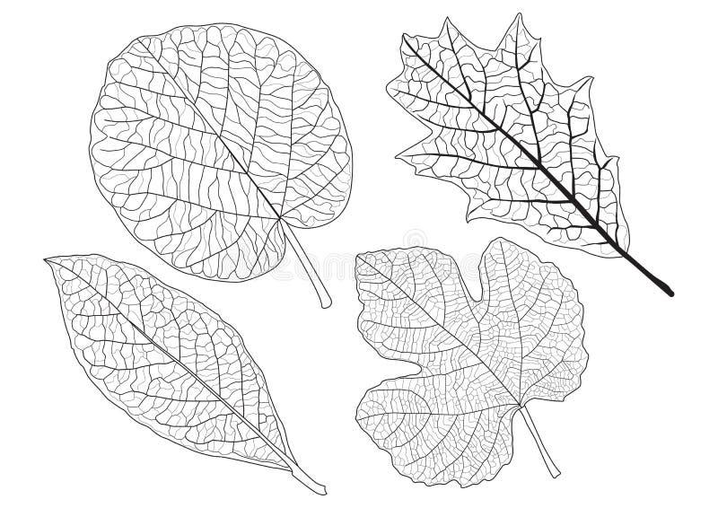Les feuilles squelettiques ont ray? la conception sur le fond blanc illustration stock