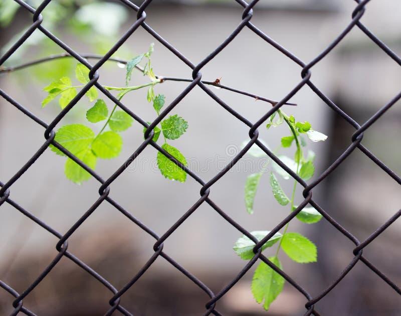 Les feuilles sur l'usine pour le métal engrènent photographie stock libre de droits