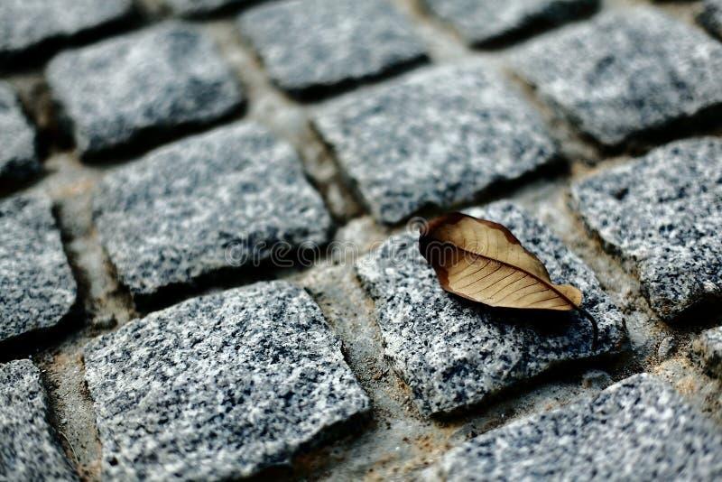 Les feuilles sur le fond de roches photo libre de droits