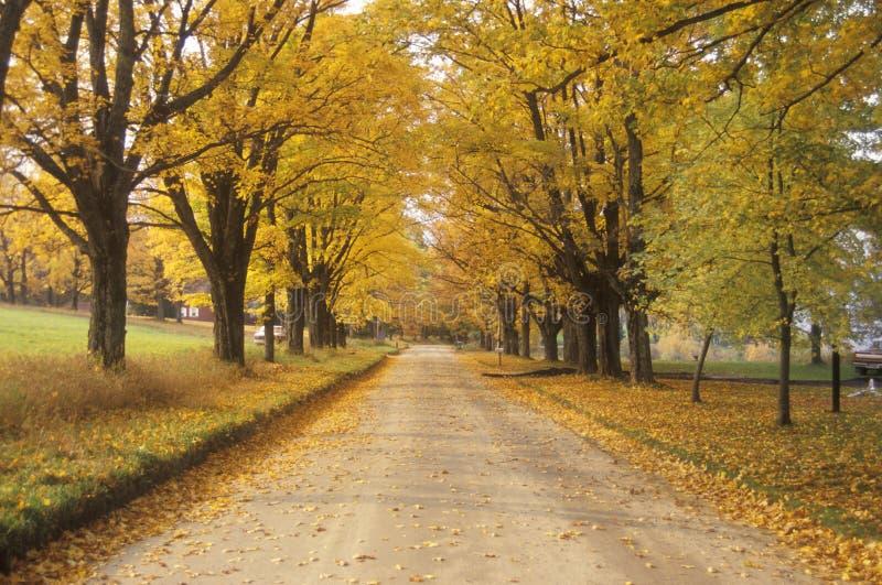 Les feuilles tournent jaune à côté d'une route rurale dans Peacham, Vermont image stock