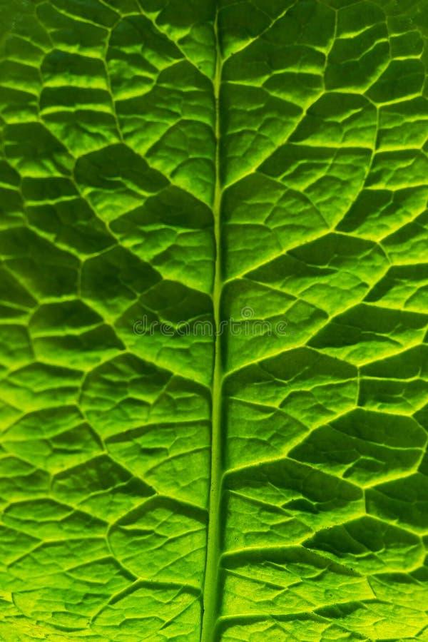 Les feuilles vertes ont accentué par le soleil L'usine a une belle structure photos libres de droits