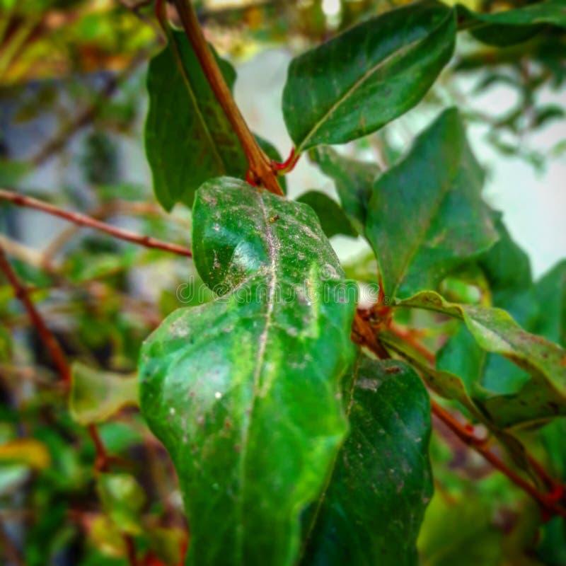 Les feuilles vertes sans fin et sa beauté photographie stock libre de droits