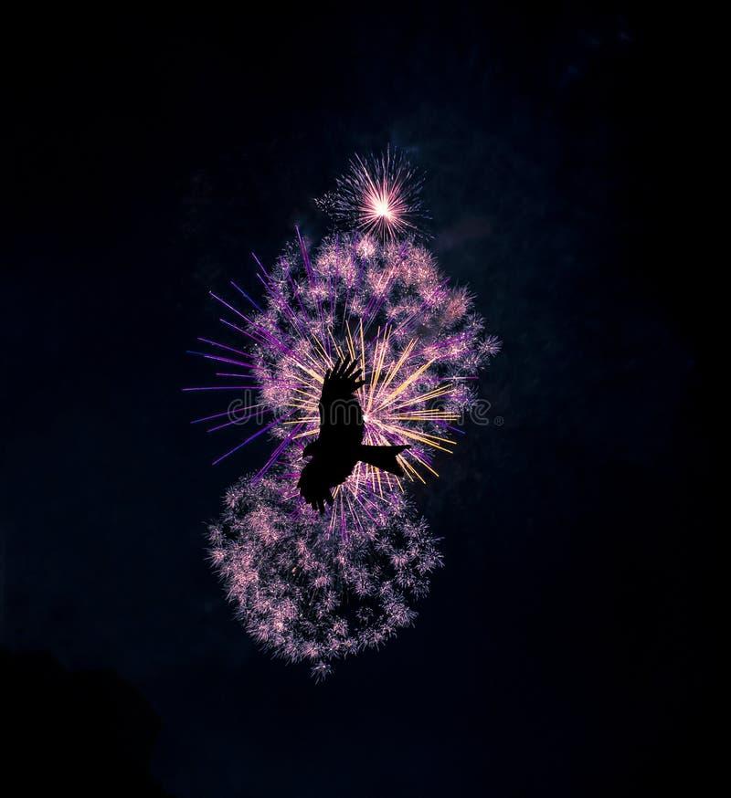 Les feux d'artifice montrent avec la silhouette d'un oiseau de vol - Londres image stock