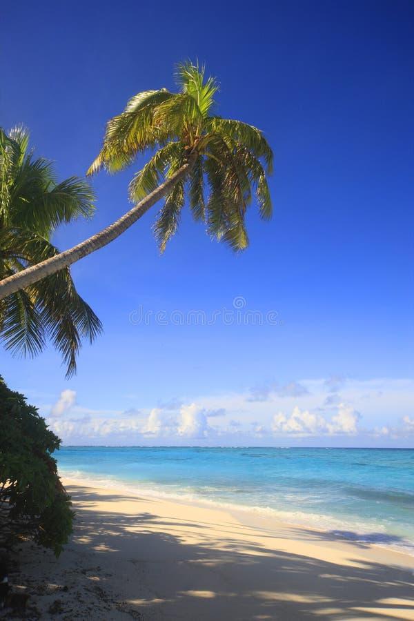 Les Fidji-Inseln photo stock