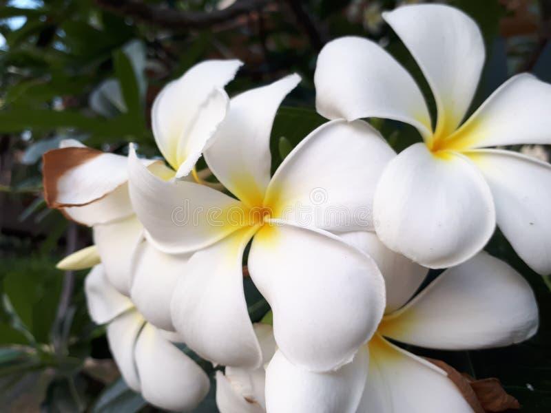 Les fleurs images stock