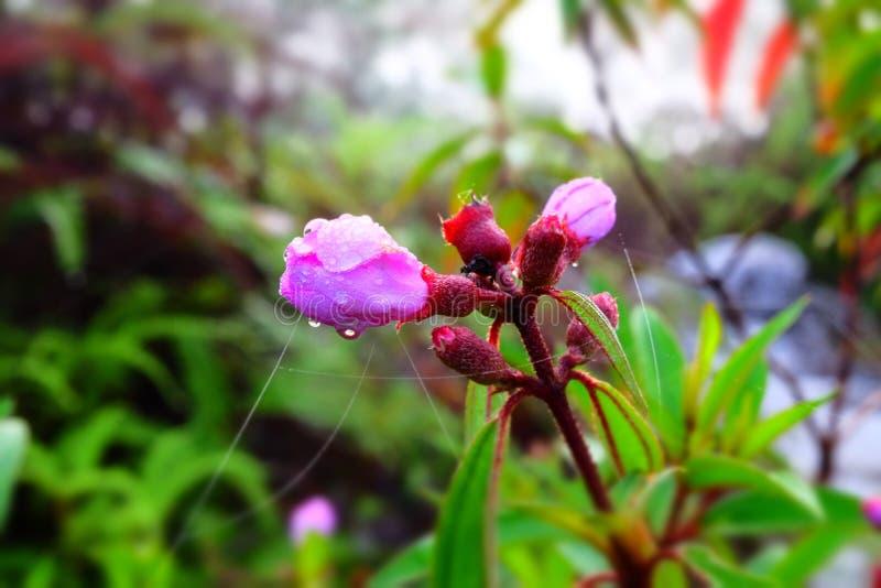 Les fleurs avec le matin mouille et des toiles d'araignée image libre de droits