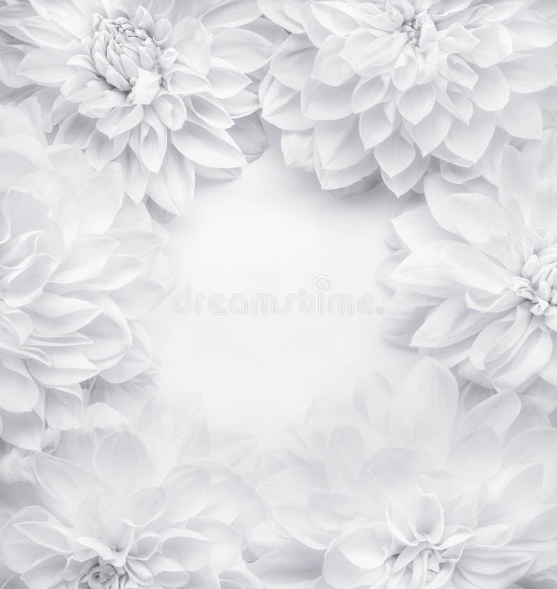 Les fleurs blanches créatives encadrent le fond, le modèle floral ou la disposition pour la carte de voeux du jour de mères, anni images stock