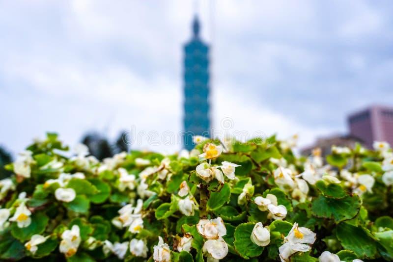 Les fleurs blanches dans le jardin de la ville de Taïpeh, Taïwan photographie stock libre de droits