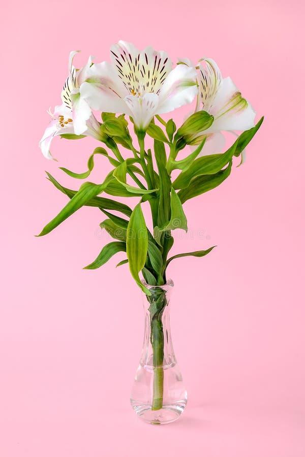 Les fleurs blanches de l'alstroemeria, ont généralement appelé le lis péruvien ou le lis des Inca dans un petit vase en verre tra image stock