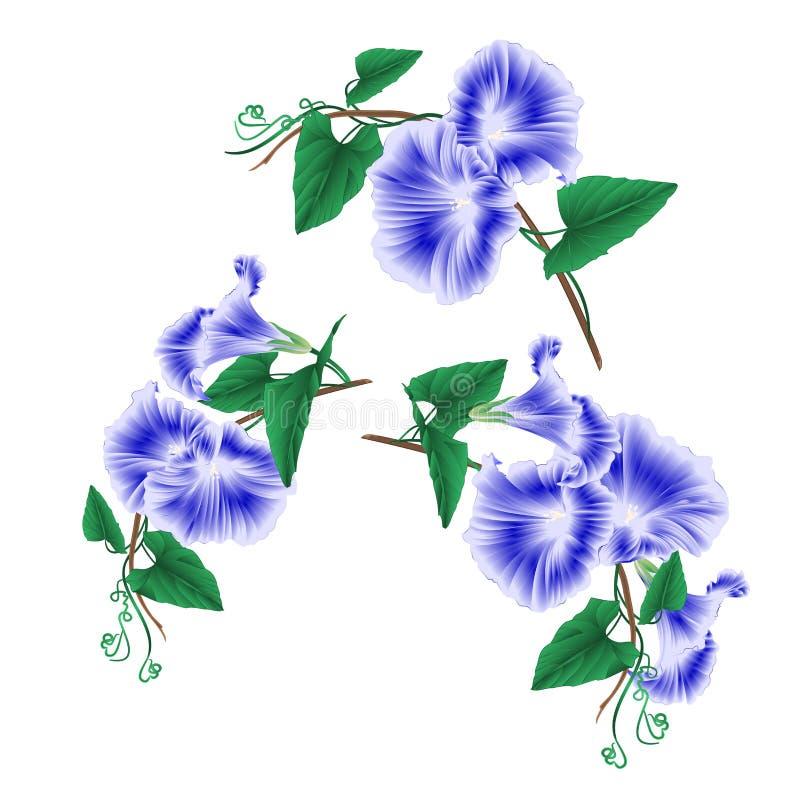 Les fleurs bleues de ressort de gloire de matin ont placé l'illustration de vecteur de vintage editable illustration libre de droits