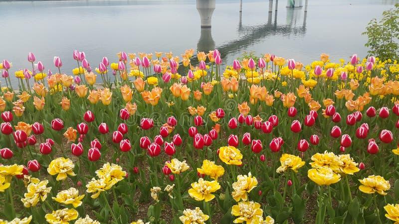 Les fleurs colorées ont planté sur une plage de mer image libre de droits