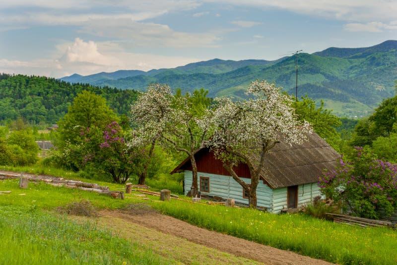 Les fleurs d'Apple fleurissent au printemps d'un beau jour ensoleillé photos stock