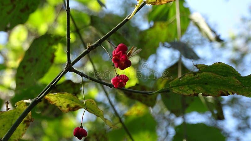 Les fleurs d'automne de la forêt attirent les petits insectes volants avec leur arôme images stock