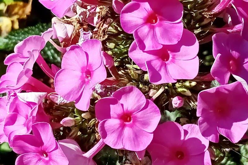 Les fleurs d'automne se ferment vers le haut des vues image stock