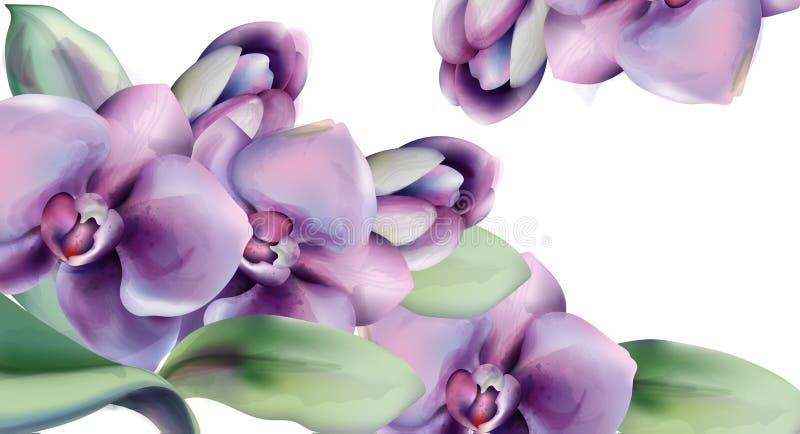 Les fleurs d'orchidée dirigent le cadre d'aquarelle Fond de printemps Carte de c?l?bration de c?r?monie l'?pousant Vintage romant illustration stock