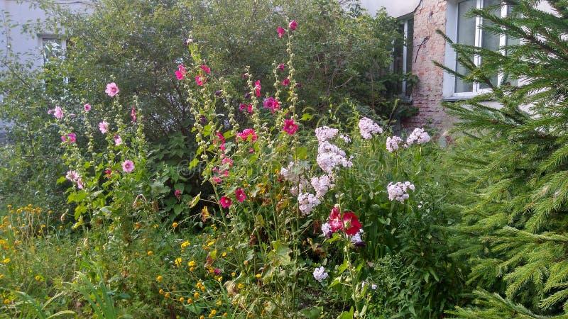 Les fleurs dans les buissons d'herbe verte de flore de jardin laisse les branches 01 08 19 photo stock