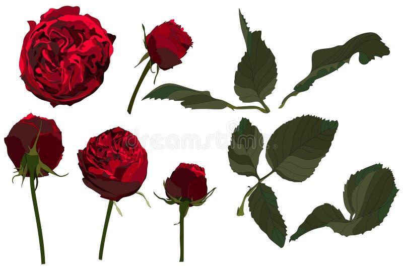 Les fleurs de cru ont placé d'isolement sur le fond blanc Le mariage fleurit le paquet illustration stock