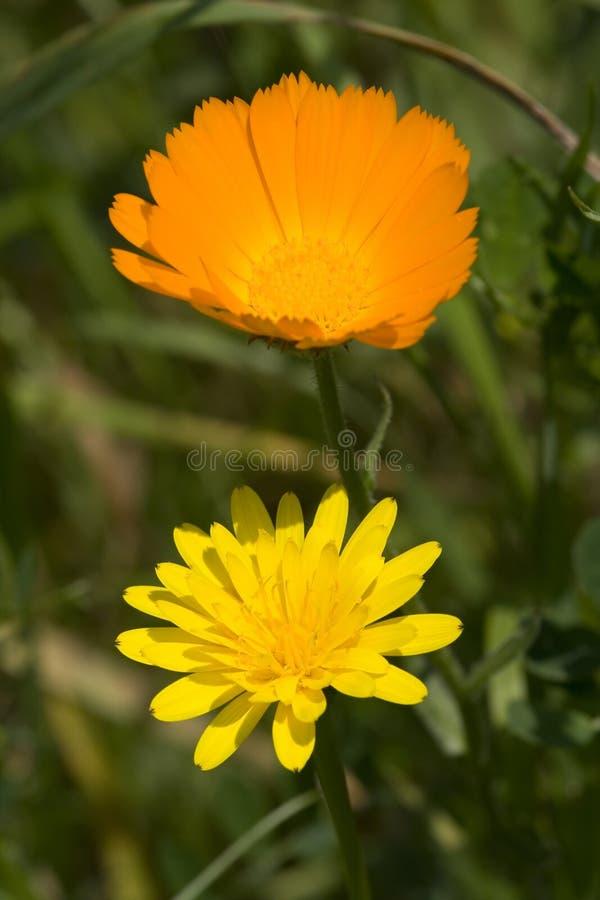 Les fleurs de la source images stock
