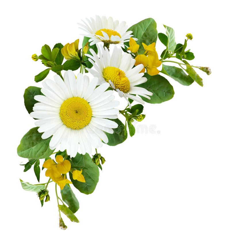 Les fleurs de marguerite et l'herbe sauvage en été acculent la disposition photos libres de droits