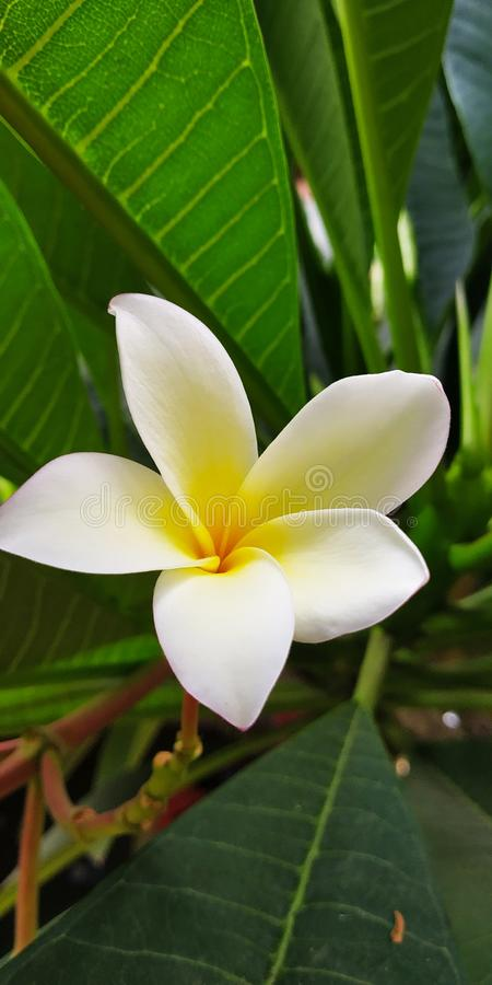 Les fleurs de nature colorent vert photos libres de droits