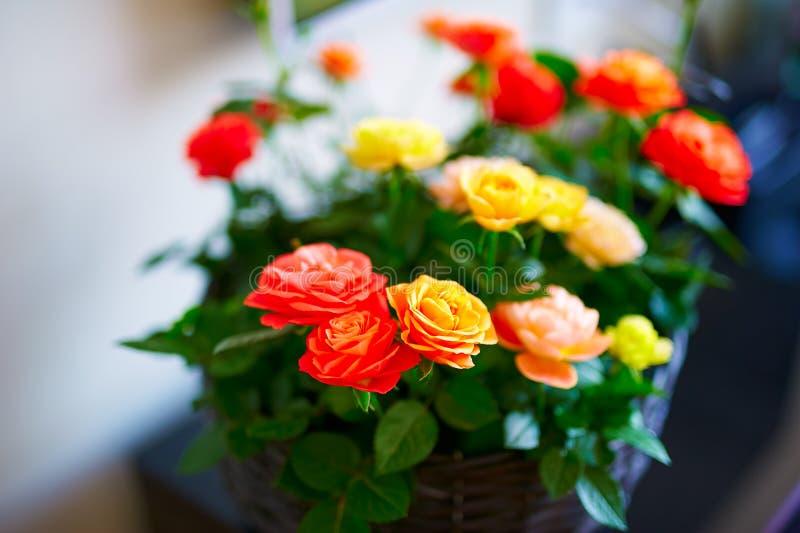 Les fleurs de rose image libre de droits