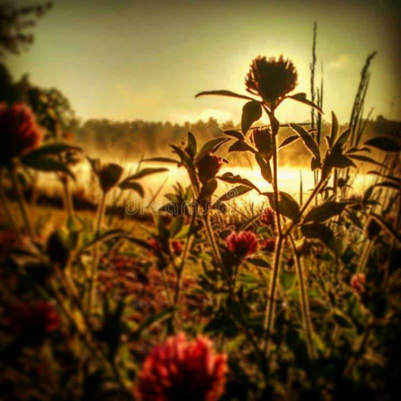 Les fleurs de rouge image libre de droits