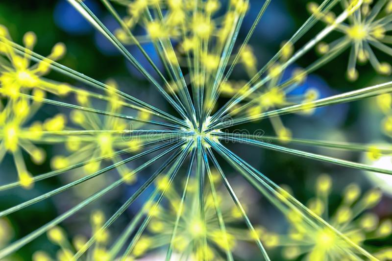 Les fleurs de yelow de pré se ferment  images stock