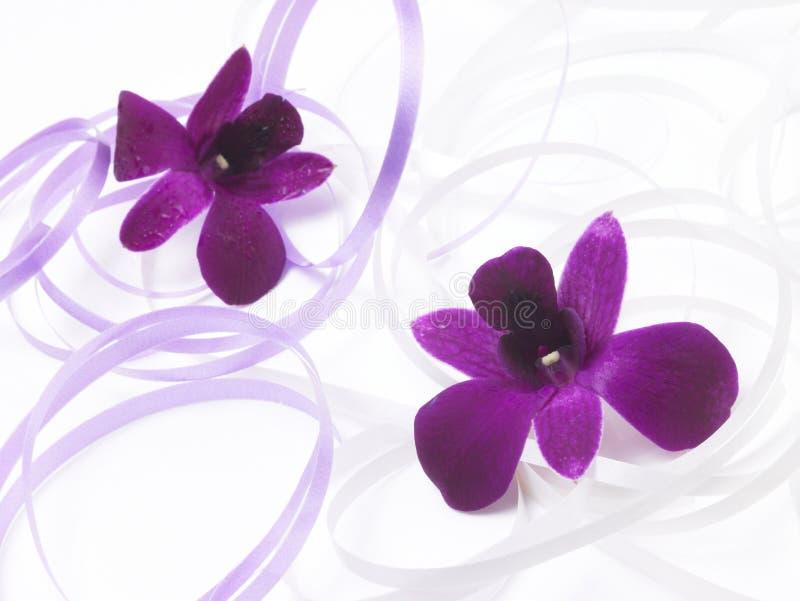 les fleurs dentellent deux photographie stock libre de droits