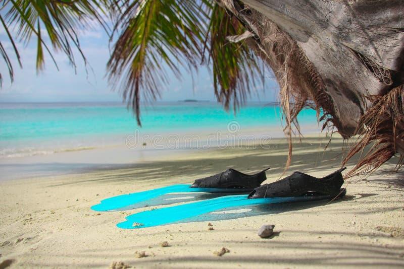 Les fleurs des frangipany exotiques roses sur un plan rapproch? de palmier sur la plage de l'?le tropicale photo stock