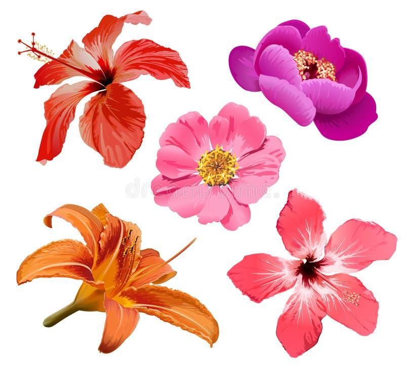 Les fleurs dirigent le positionnement illustration libre de droits