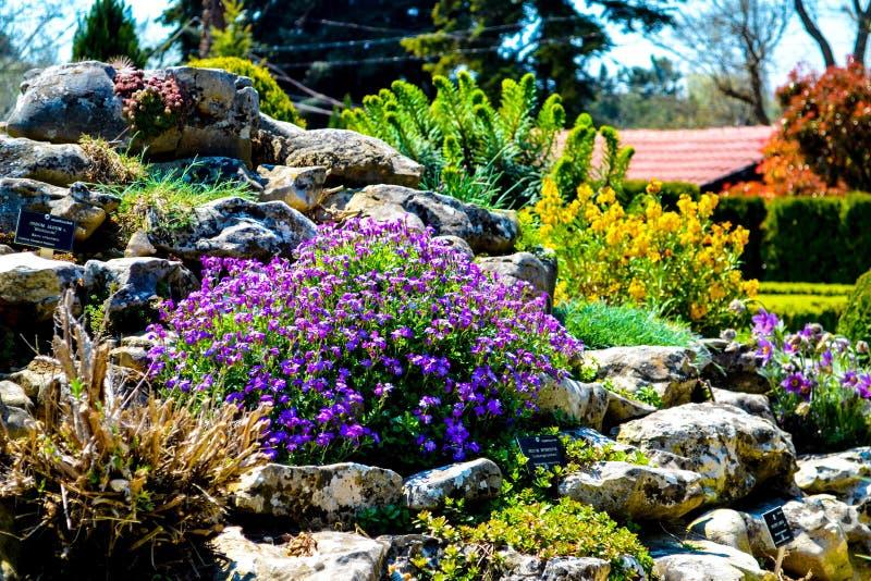 Les fleurs du jardin botanique bulgarie balchik photo for Jardin botanique de conception
