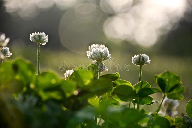Les fleurs du ressort photo libre de droits