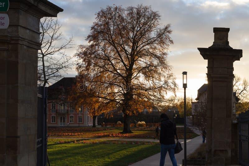 les fleurs et les bâtiments d'arbres autour d'une ville se garent en novembre à l'Au photos libres de droits