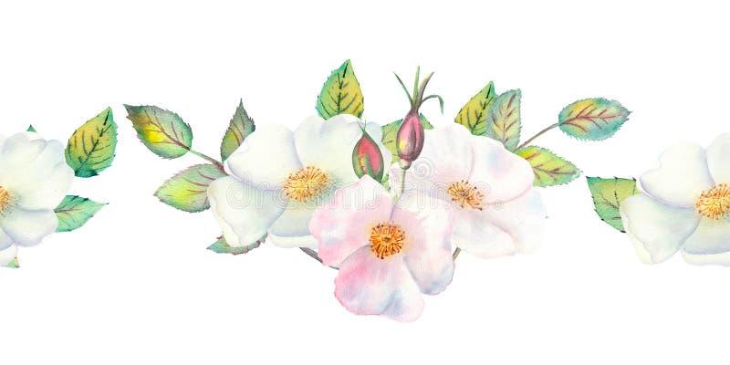 Les fleurs et les feuilles de sauvage se sont lev?es R?p?tition de fronti?re horizontale d'?t? Illustration florale d'aquarelle image stock