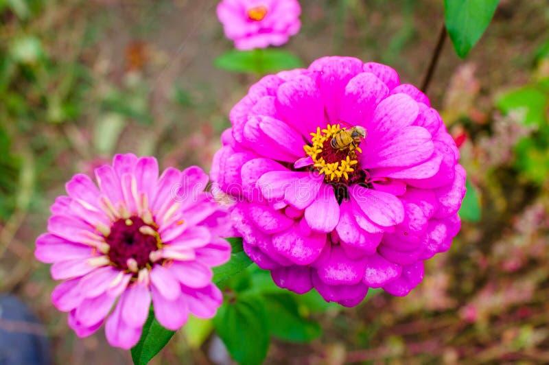 Les fleurs et l'abeille image libre de droits
