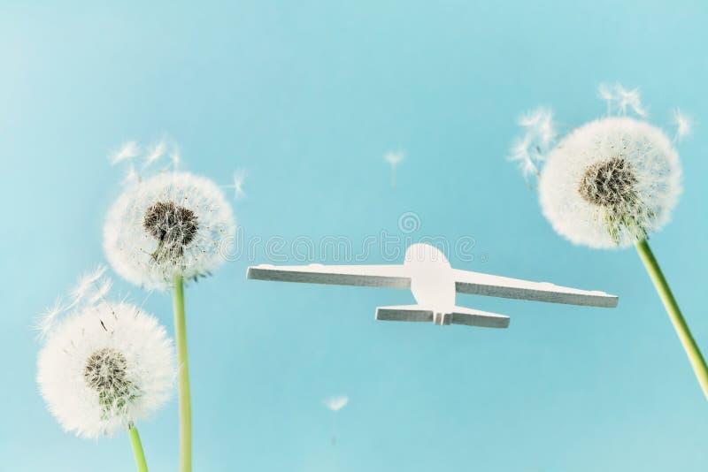 Les fleurs et l'avion de pissenlit modèlent en ciel bleu Voyage, vacances d'été, aviation et concept à trajectoire aérienne images stock